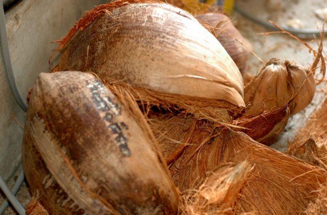 Kegunaan sabut kelapa untuk tanaman dan pekebun