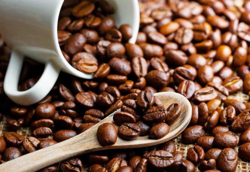 khasiat kopi luwak